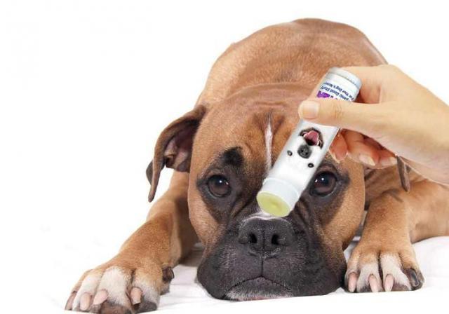 foto cane naso secco