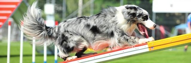 foto acido lattico cane