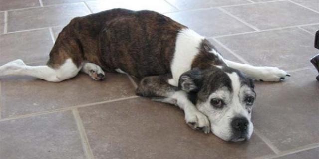 Foto Aiutare il cane a vomitare