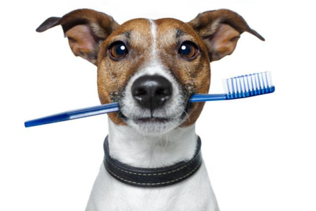 Foto Cure dentali per il Cane