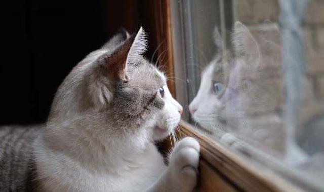 Foto Ansia da separazione nel Gatto