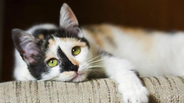foto gatto triste e ansioso
