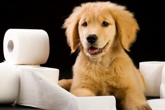 foto cane stitico