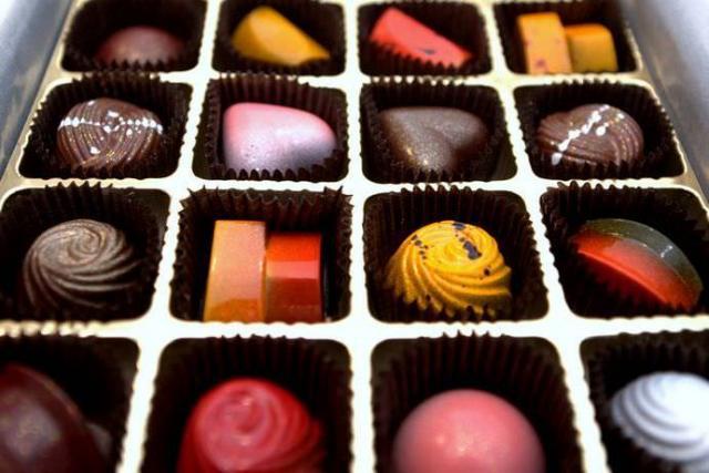 foto cioccolato tossico cane