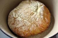 foto pasta pane tossico cane