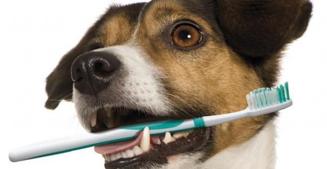 Foto Perchè il Cane ha l'alito cattivo?