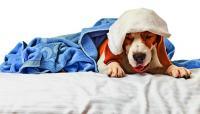 foto cane con la tosse