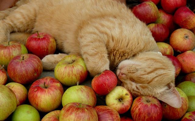 Foto Il gatto può mangiare banane, mele e pere?