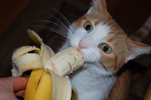 foto gatto mangia banana