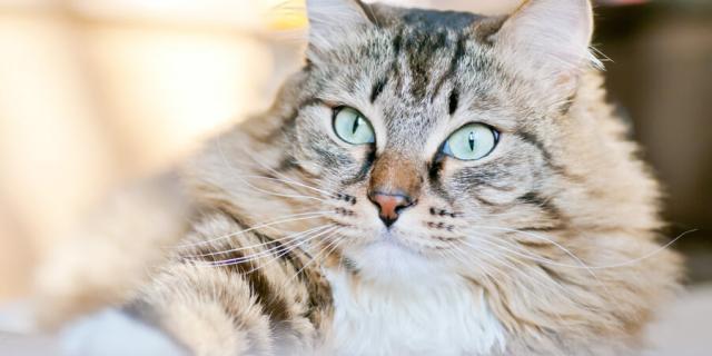 Foto Il gatto può mangiare fagioli, lenticche e piselli?