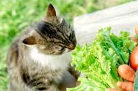 Foto Il Gatto può mangiare lattuga?