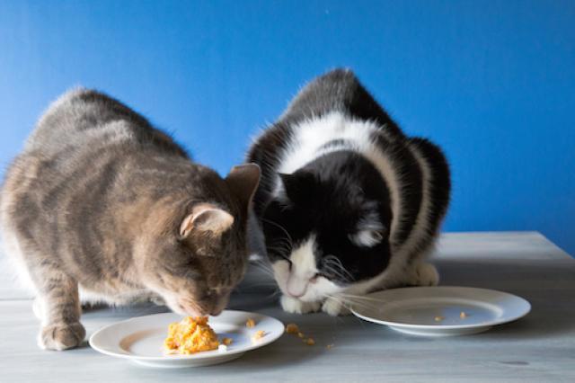 Foto Il Gatto può mangiare patate?