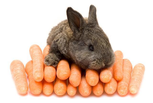 foto coniglio mangia carote