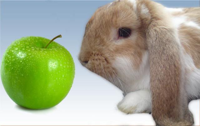 Foto Il Coniglio può mangiare mele?