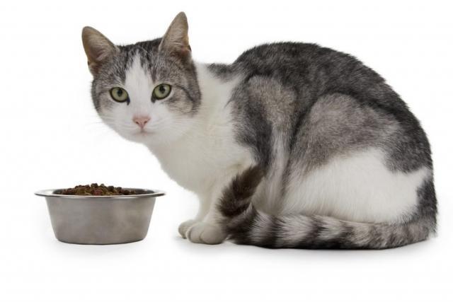 Foto Quanto tempo il gatto può rimanere senza mangiare?
