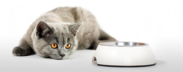 gatto non mangia
