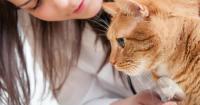 gatto anoressia