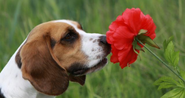 foto annusa fiori