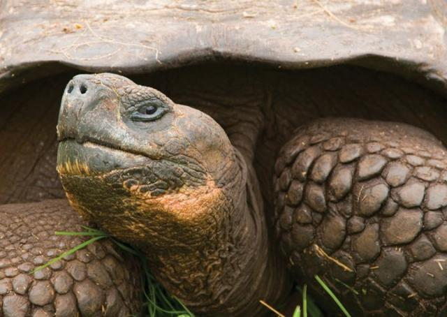quanto vive tartaruga