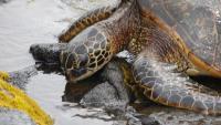 Foto Quanto vive una tartaruga?