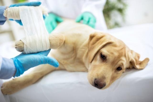 Foto Come scegliere un buon veterinario per il cane?