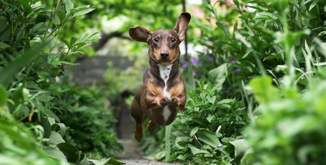 rimedi naturali per cani