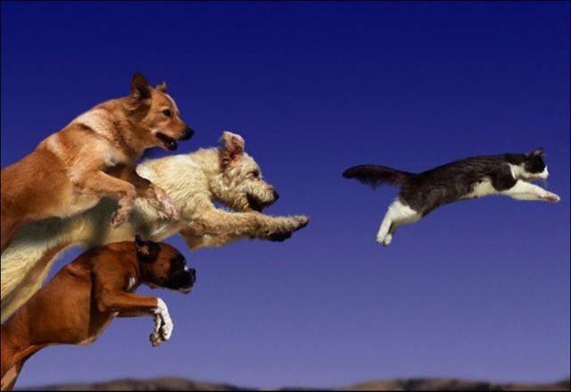 Foto Cosa fare se il cane insegue tutto?