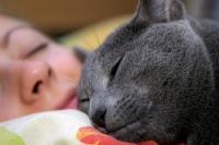 Perchè il Gatto dorme con me?