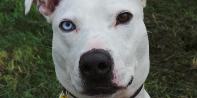Foto Buddy il cane che nessuno vuole