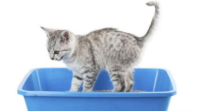 gatto urina fuori dalla lettiera