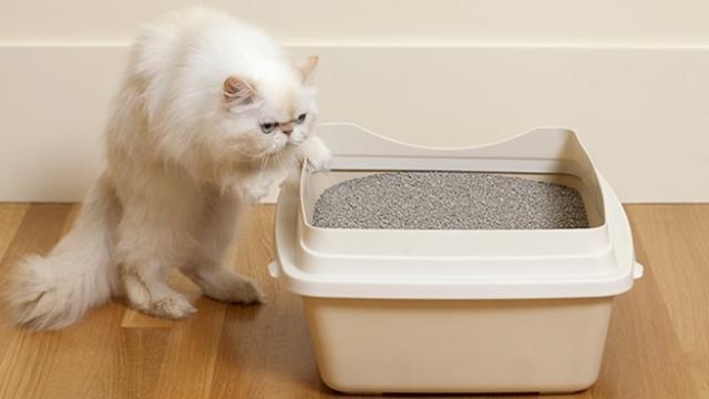 Foto Perchè il mio gatto fa pipì ovunque?