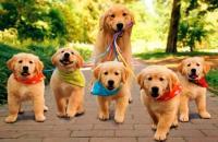 Foto Metodi contraccettivi per Cani