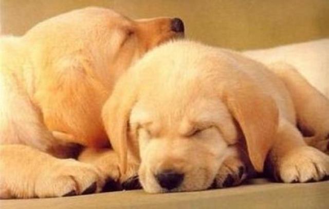 feromoni cani