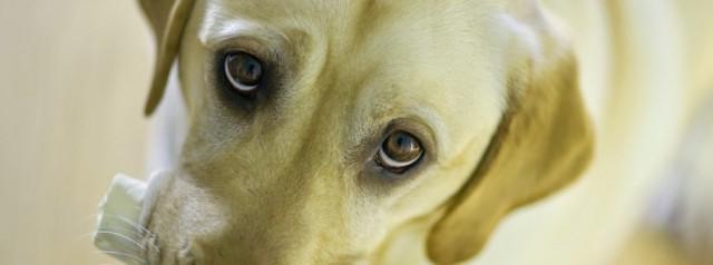cane malato insufficienza renale