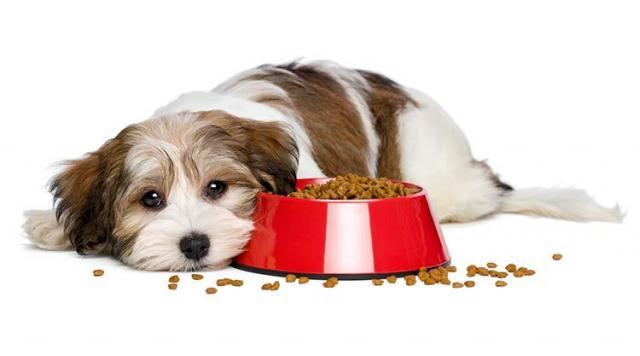 Foto Perche' il mio cane non mangia? Cause e soluzioni