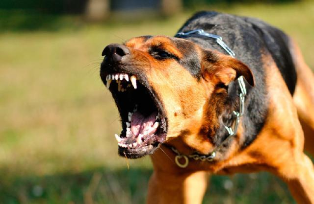 Foto Perchè il mio cane è aggressivo?