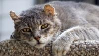 vecchiaia del gatto