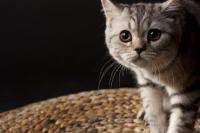 gatto pauroso