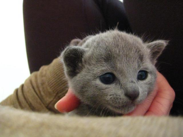 Foto Fino a che età cresce il Gatto?