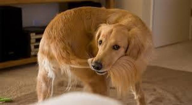 Foto La coda del Cane rivela le sue emozioni