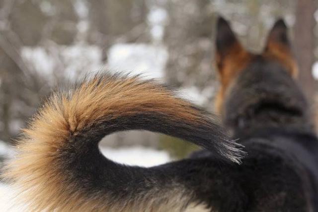 Foto coda cane umore