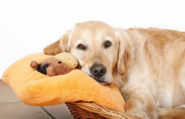 Foto Indigestione e mal di pancia nel Cane