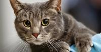 foto gatto malato