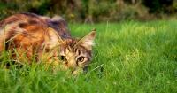 Foto Aloe per i Gatti con leucemia felina