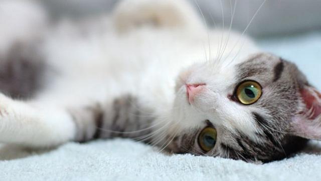 Foto Come curare l'influenza del Gatto