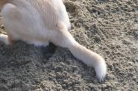 cane rincorre coda