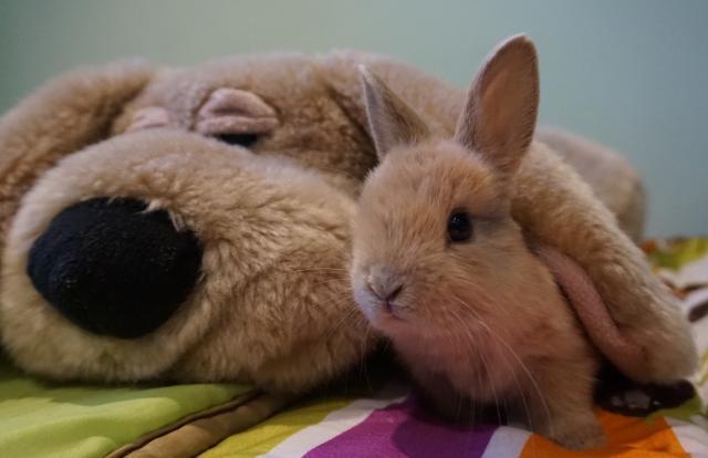 Foto Come capire se il Coniglio è malato