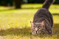 Foto abitudini del gatto