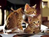 gatti si leccano per affetto