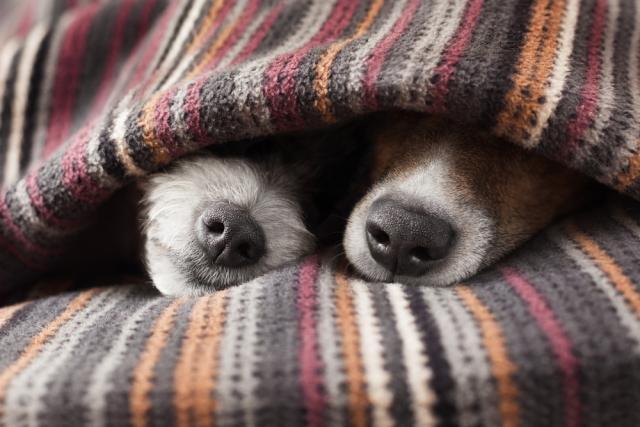cani sotto le coperte